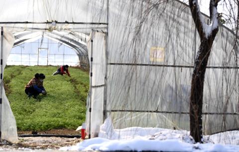 地綿萬裏逐春光——疫情下的江淮農業生産保衛戰