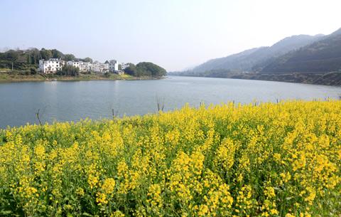 春回新安江