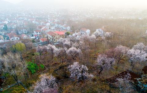 山花遍野滿目春