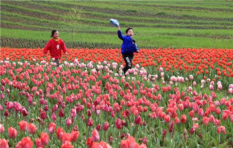 春到皖南郁(yu)金香