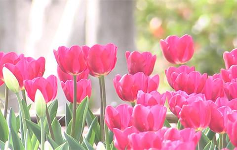 微視頻(pin)︰久違了!公(gong)園和春天如約(yue)而至