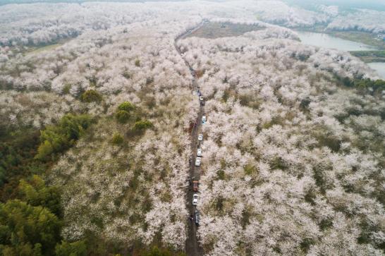 春景如畫(hua)