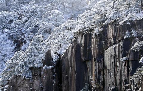 """黃山迎來""""桃花雪"""" 雪凇雲海別樣美"""
