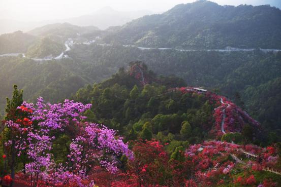 大別山(安徽•岳西)天峽第三屆杜鵑花文化節暨(ji)開園儀式(shi)舉行(xing)