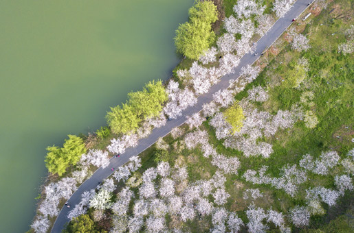 航拍︰一池山水滿城花