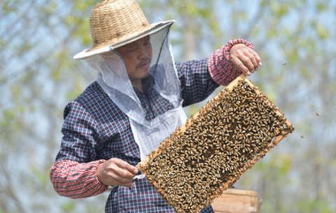 """養蜂人踏上""""甜蜜""""復工路"""