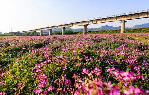 安徽銅陵:萬紫千紅四月天