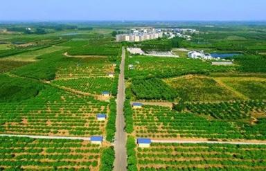 肥(fei)西︰以美麗鄉村建設助推(tui)鄉村振興
