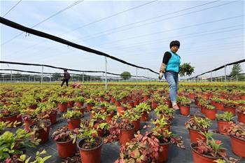 安徽蒙城:花木經濟助農增收