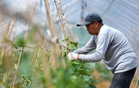 生態農業助力鄉村振興