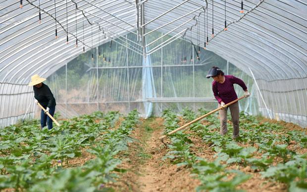 生態農業助力(li)鄉村振興