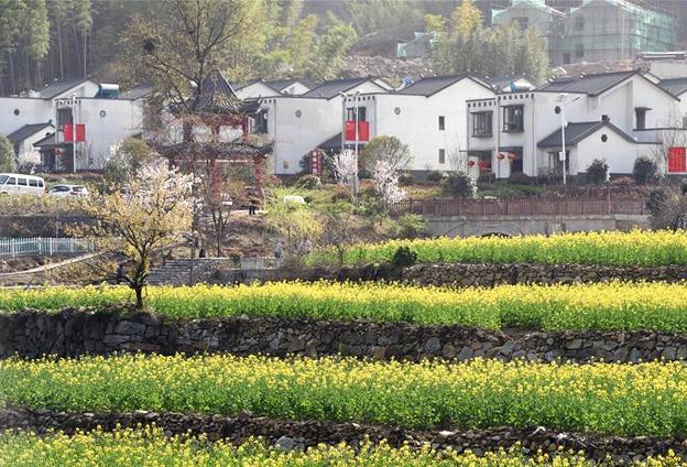 大灣村環境更美了,村民兜裏更有錢了,精神面貌也比過去更好。