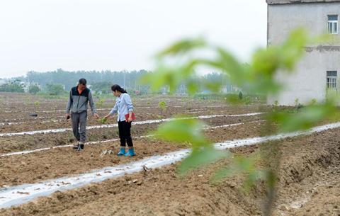 王萌萌:産業興旺讓鄉村振興更有底氣
