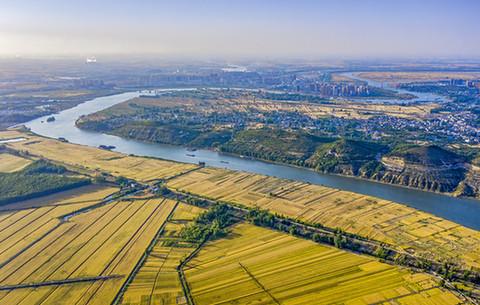 航拍:淮河岸上 風吹麥浪