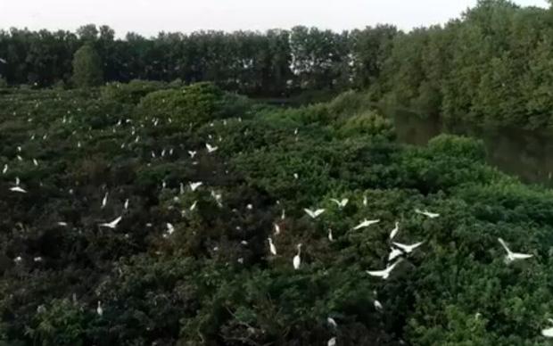 微視頻︰又見白(bai)鷺自在飛