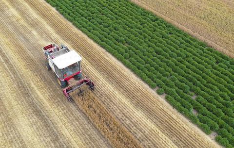 航拍:小麥開鐮收割