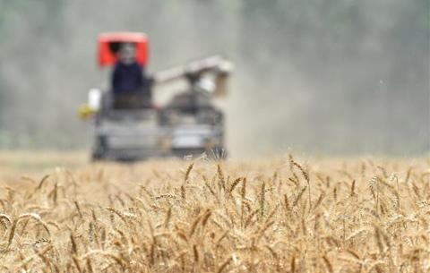 安徽:小麥收割忙