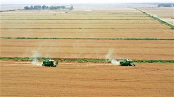 安徽小麥陸續開鐮收割