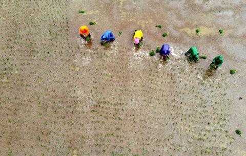 安徽五河:雨中搶種忙