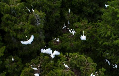 水源生態美 鷺鳥自在飛
