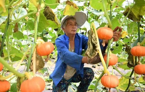 安徽肥西:産業扶貧結碩果