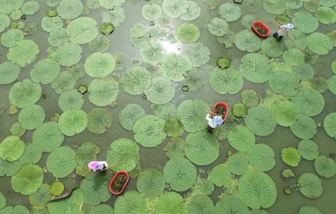 航拍:水生經濟 綠色發展