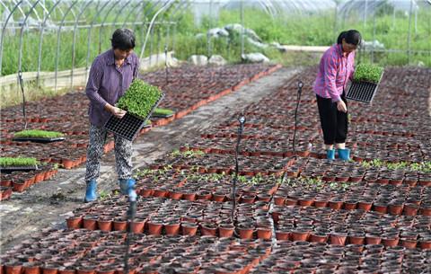 安徽肥西:積極開展生産自救