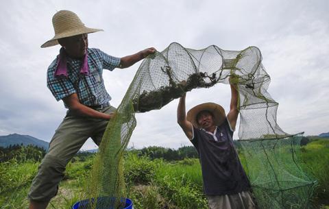 稻香蝦肥 脫貧增收
