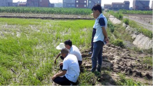 災後生産自救 安徽農業氣象人在一線
