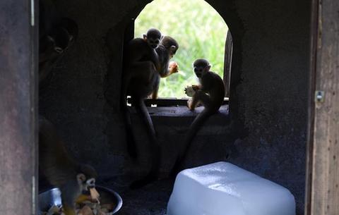 合肥:給動物送清涼
