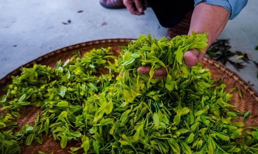 第十三屆安徽國際茶博會閉幕