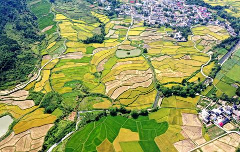 香了稻花 美了鄉村