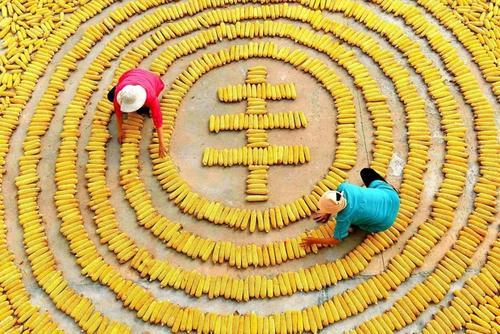 合肥市2020年中國農民豐收節將于9月22日開幕