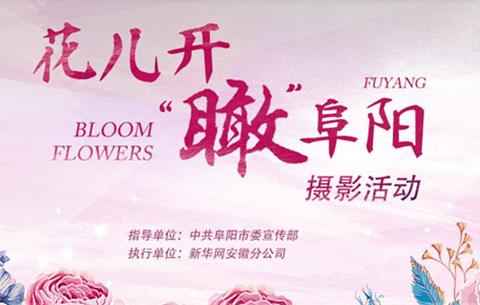 """花兒開""""瞰""""阜陽"""