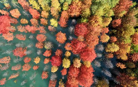 微視頻:這就是秋天裏的中國