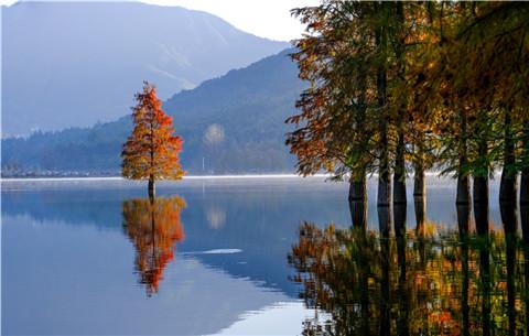 安徽黃山:晨霧縹緲奇墅湖