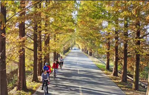 微視頻:初冬時節 這條皖南山路美成了畫