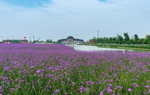 【新春走基層】滁河岸邊新年景
