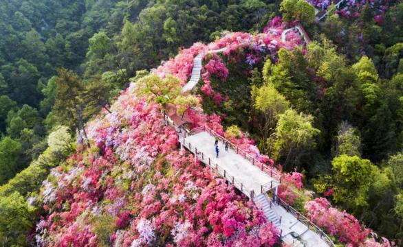 岳西天峽第四屆杜鵑花旅遊文化節開幕
