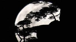 美到震撼!當圓月遇上黃山奇松、怪石