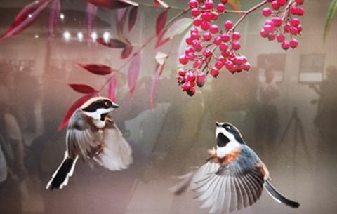 """""""翼翼生輝""""!看看這些鳥兒有多美"""