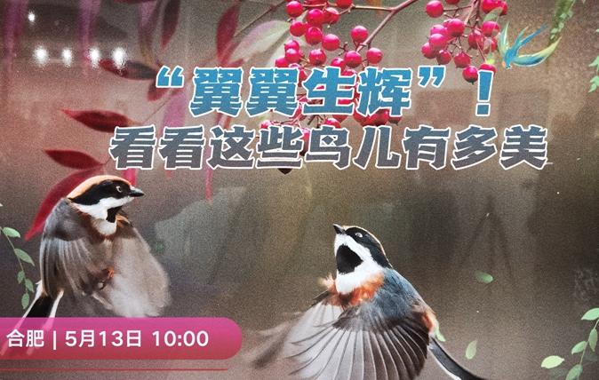 【新華雲直播】看看這些鳥兒有多美