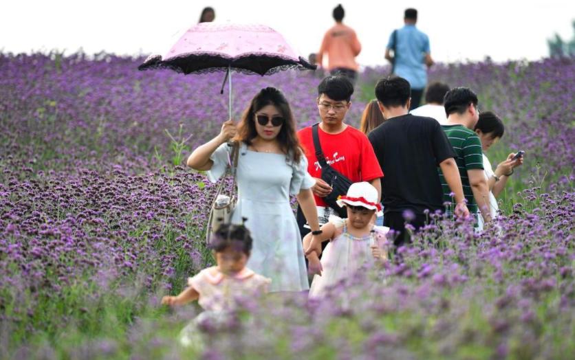 端午假期安徽文旅市場持續復蘇 接待遊客1496.39萬人次